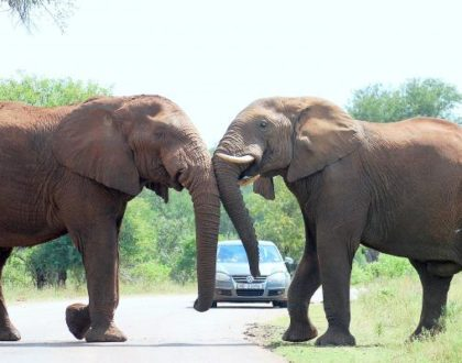 Guided Kruger Park Tours You'll Never Forget