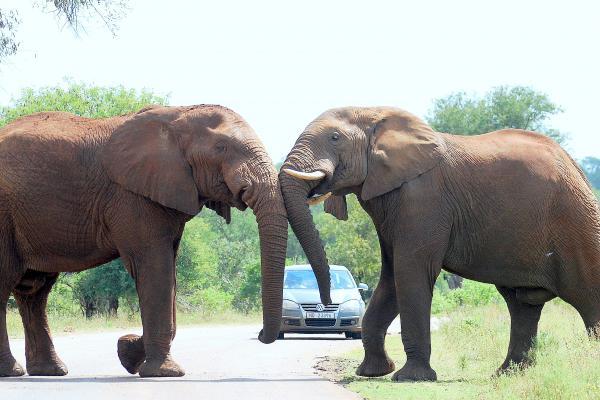 4 day kruger national park safari