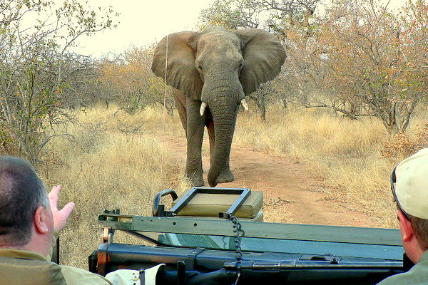 Southern Circle Tours: A Brief History of the Kruger National Park