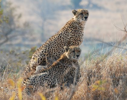 What to Do in the Kruger Park this Festive Season