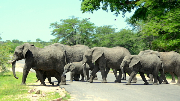 5-day kruger park safari