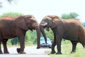 Self-drive safari in Kruger national park