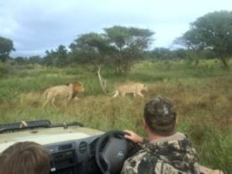 self-drive zululand for wildlife