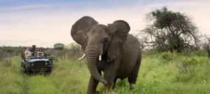 10-day tour South Africa
