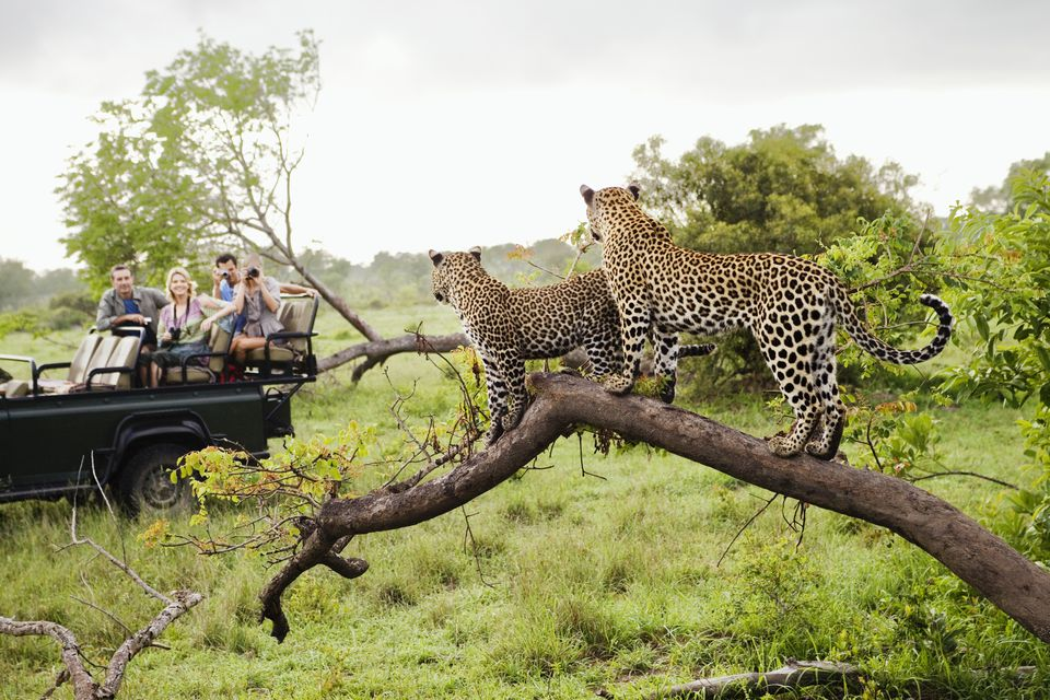 South African travel packages