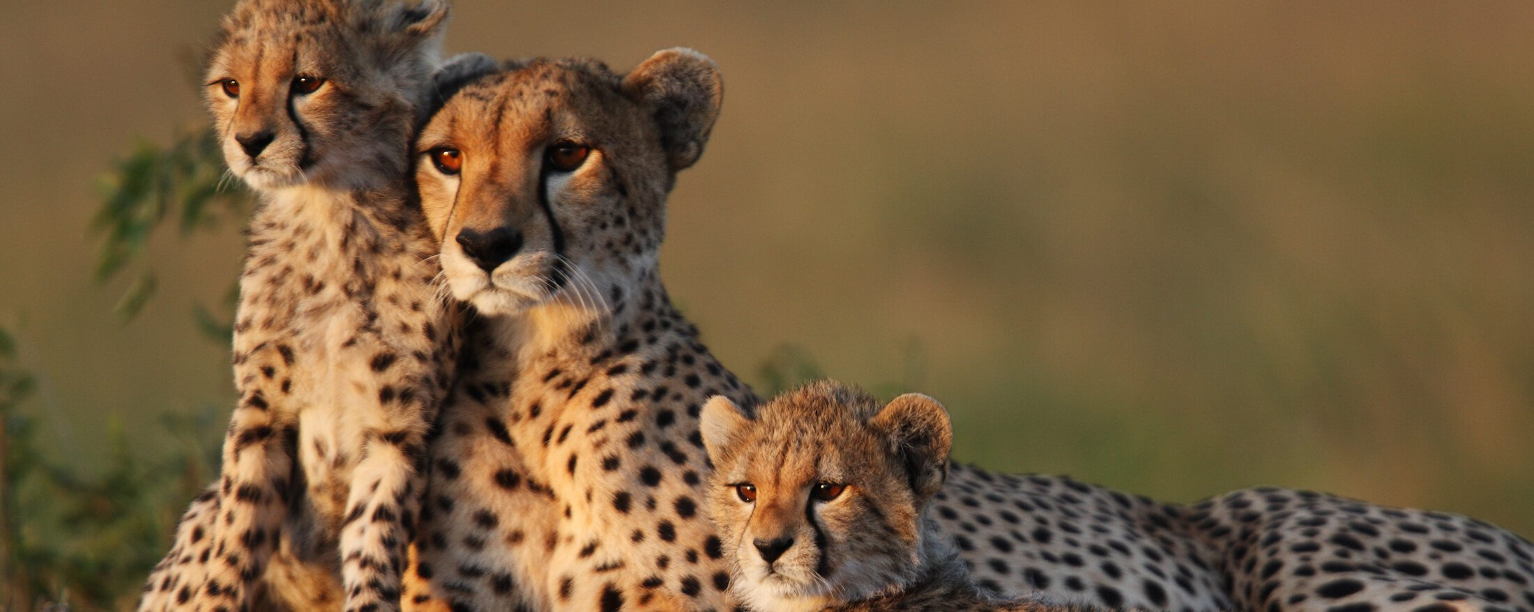 lesser-known wildlife in south africa