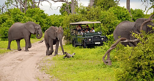 safari_game_drive_in_the_chobe_national_park_1_hero