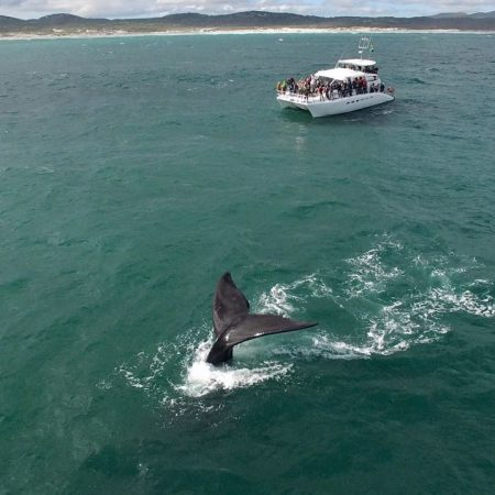 Cape whale watching