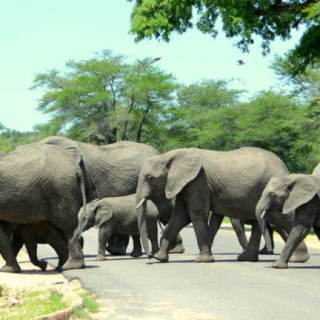 Beware-Elephants-crossing