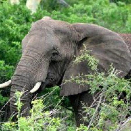6-day kruger park safari