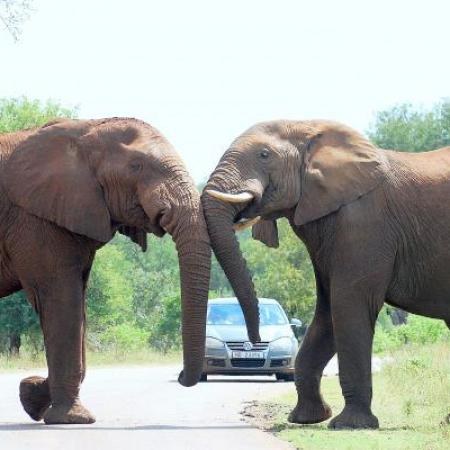 guided kruger park tours - Southern Circle