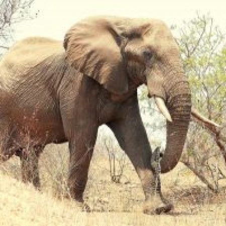 Elephant-walking-towards-car-300x201