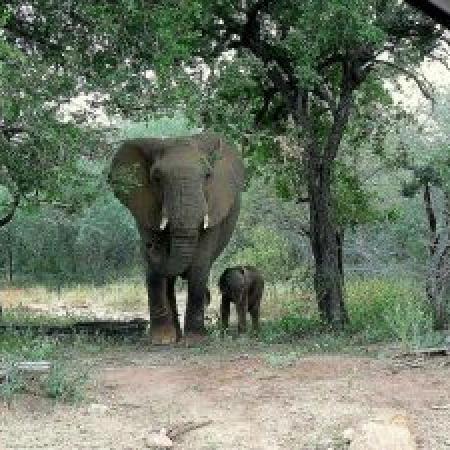 Elephant-with-baby-300x225
