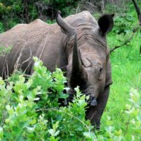 highlights on safari in south africa