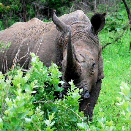 Rhino-very-close-1