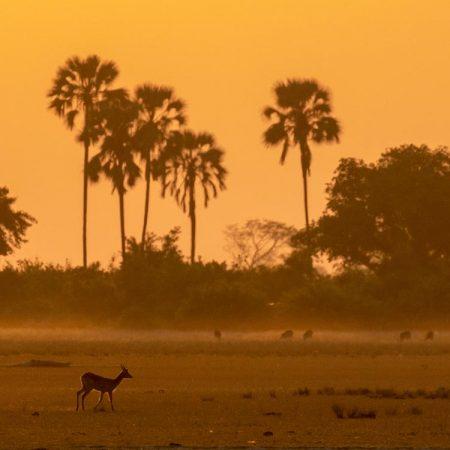 Springbok-on-the-plains-750