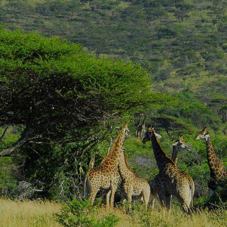 3 day kruger park safari