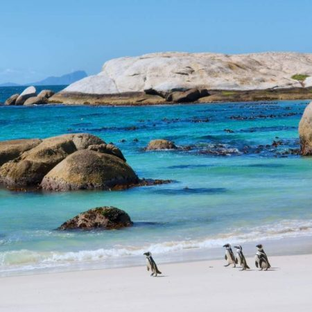 cape-peninsula-tour