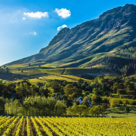 Cape Winelands guided tour