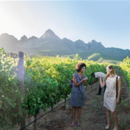 cape-winelands-tour-300x177