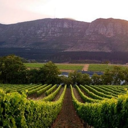 Cape Winelands - day tour