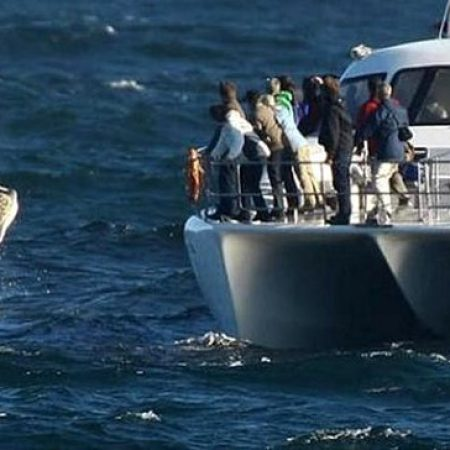 full-day-whale-watching