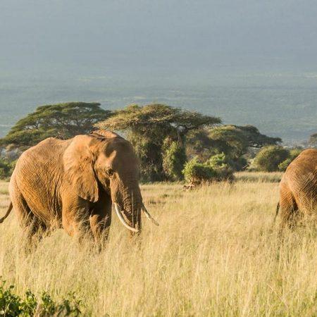 iStock_509720000_tanzania_mt_kilimanjaro_elephants_2400x800