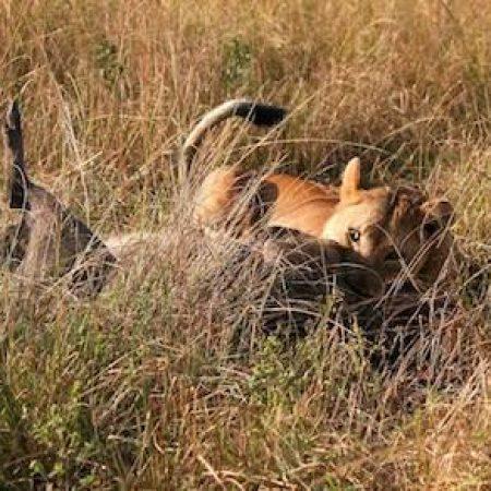 Kruger Park and Hluhluwe safari