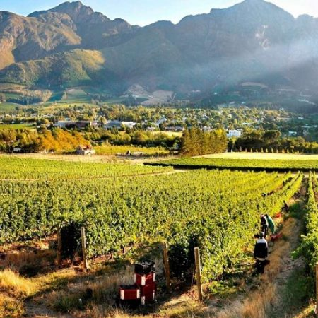 Cape Winelnads guided tour