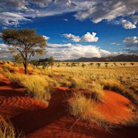 namibia-Willem-Kruger-shutterstock_201561224-528x351